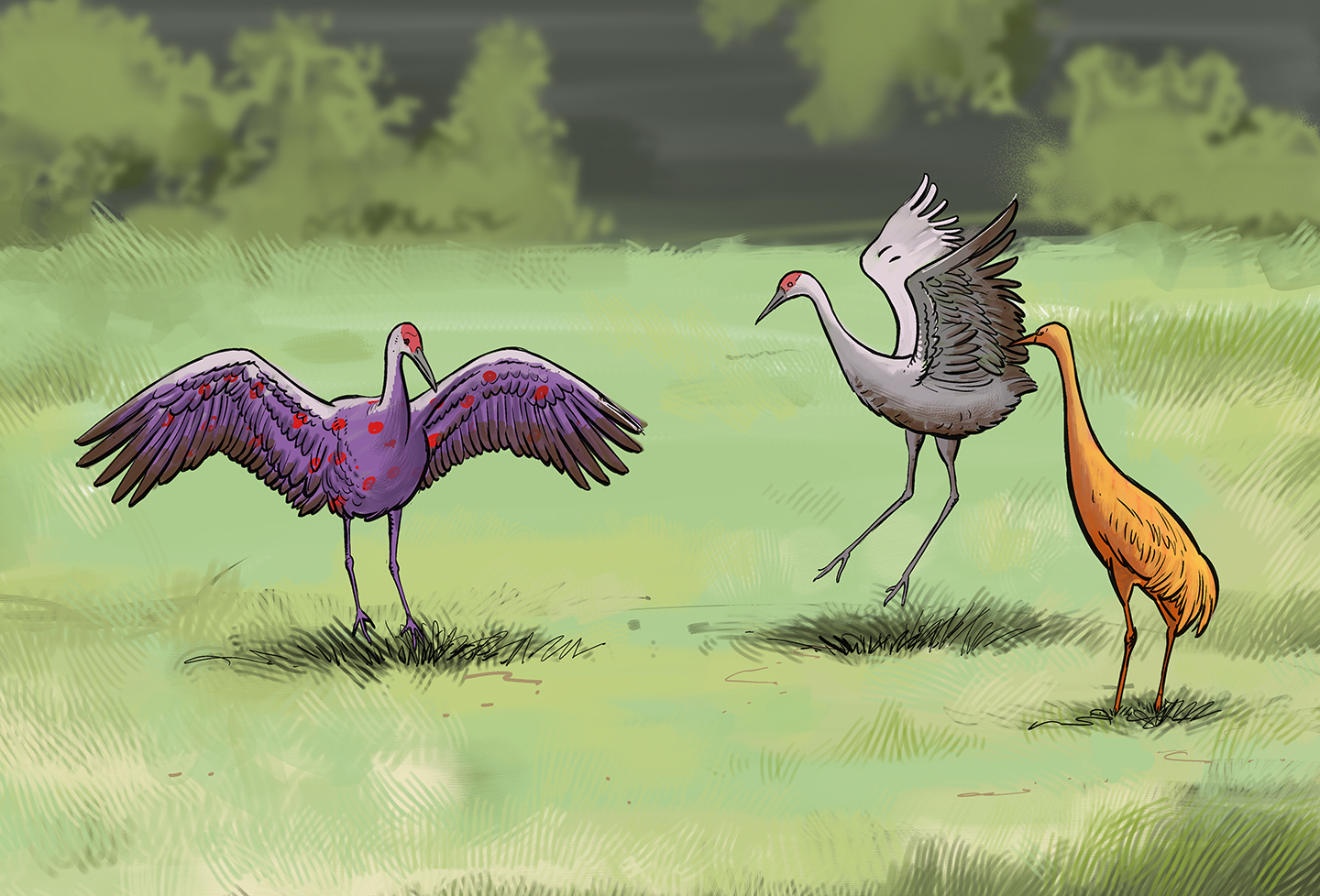 Three common cranes in a field, each a different color.