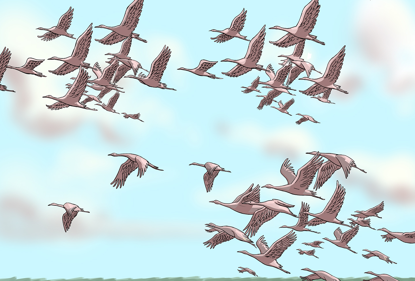 A sky full of cranes, this time grouped into three smaller flocks and several stragglers flying alone.