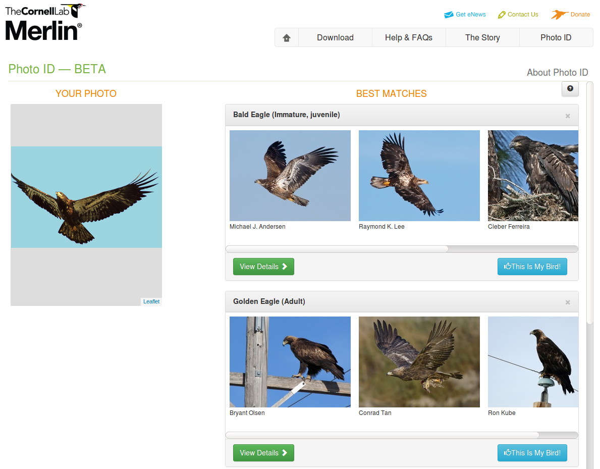 Cornell Ornithology Lab's Merlin ID tool
