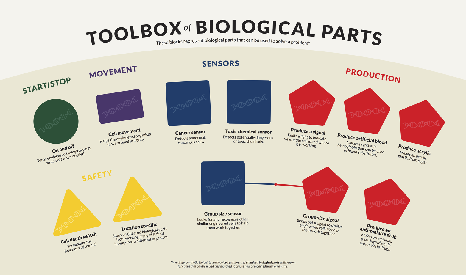 Toolbox of biological parts